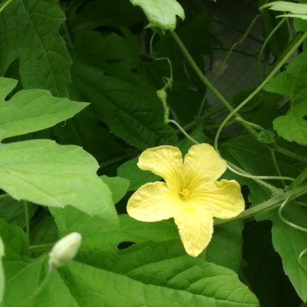 良く似ている花